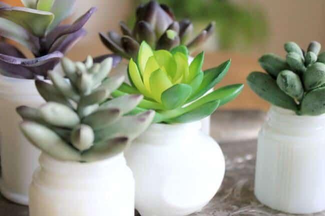 Milkglass Succulent Garden: how to create a small succulent garden using mini milkglass containers.