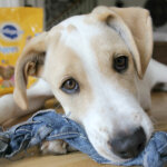 DIY Dog Toy – perfect for puppies