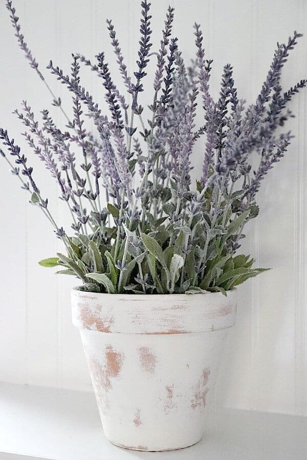 Limewash isn't just for bricks! Thinking outside the box, I was able to create this DIY Limewash Terra Cotta Lavender Plant. Try these creative decor ideas!