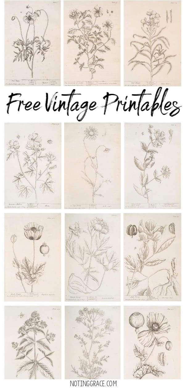 image regarding Free Vintage Printable called Free of charge Typical Printable Art Noting Grace
