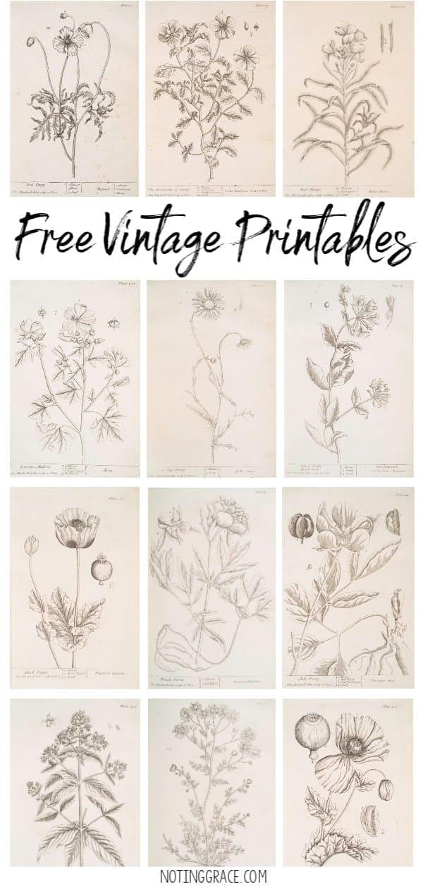 image regarding Free Vintage Printable called Free of charge Typical Printable Art Noting Grace