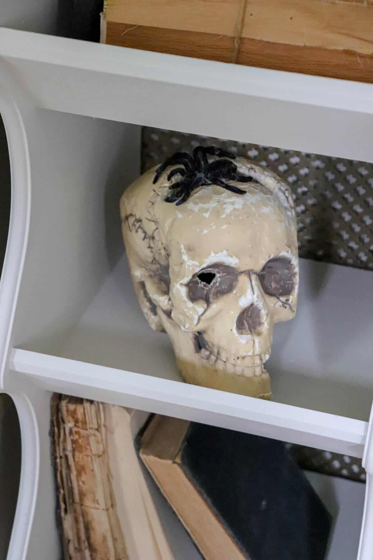 foam skull with black plastic spider hanging out