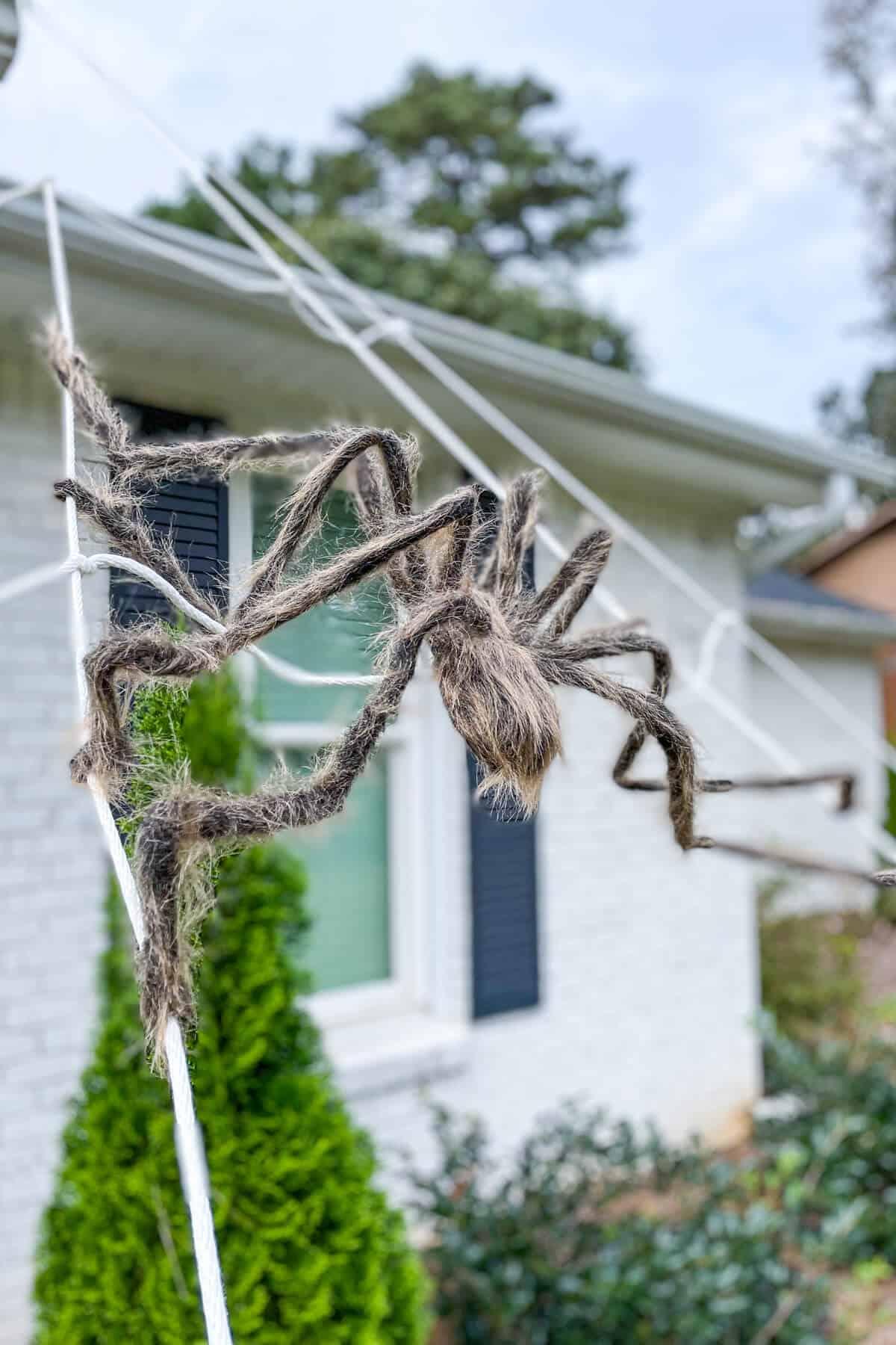 fake spider on DIY spider web